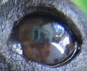 Can you find me in Tootsie's eye...I'm there!
