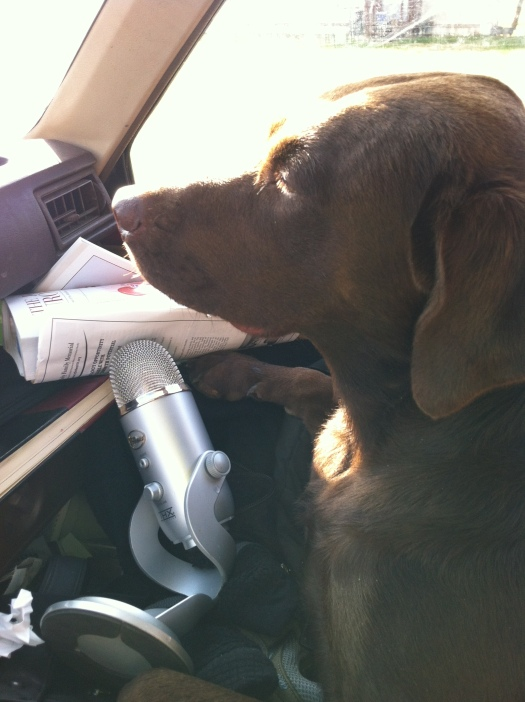 Penelope is now doing a radio show about chocolate labs and the dangers to their teeth from chasing sticks.